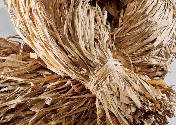 fiber-palm_0.jpg