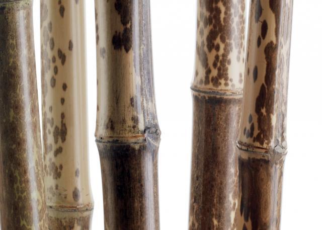 fiber-bamboo_0.jpg